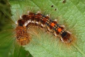 garden pest. Garden Pest. Image Source. LEAF Pest