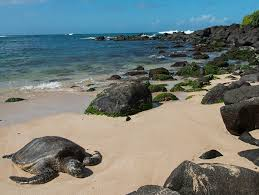 Laniakea Beach Haleiwa United States Hawaii Afar