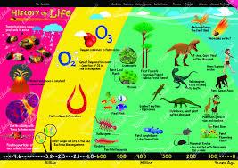 Evolution History Of Life Evolve Kids Charts Science