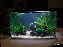 fish tank lighting ideas. Aimable Best Aquarium Design : Happy Fish At Play Freshwater Ideas Gallon Led Tank Lighting