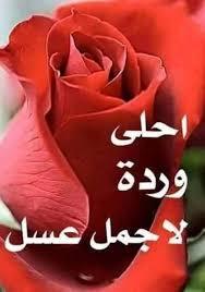 woman twitter good morning flower arabic es bonjour es in arabic buongiorno flowers