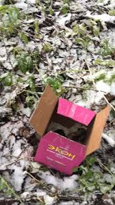 гибдд Инспекторы ГИБДД Череповецкого района спасли от гибели щенков щенки Череповец длиннопост найденыш