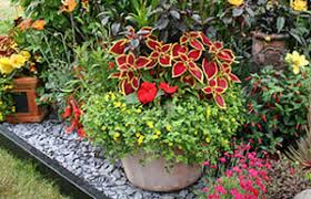 Small Picture BBC Gardening Gardening Guides Techniques Plant up a container