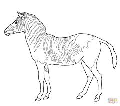 Small Picture Coloring Pages Cute Baby Zebra Coloring Page Free Printable