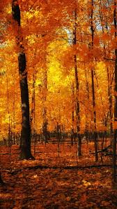fall iphone 6 wallpaper. Unique Iphone Orange Forest Autumn IPhone 6 Wallpaper Throughout Fall Iphone I