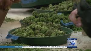 chicago medical marijuana
