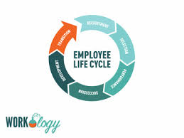 The Employment Cycle Motivation