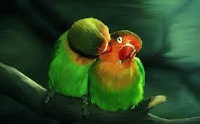 Lovebird Wallpapers - Top Free Lovebird ...