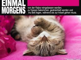 Lustige Sprüche über Katzen Arbeit Sprüche Suche Avec Advent Lustige