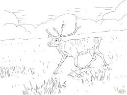 Small Picture Svalbard Reindeer coloring page Free Printable Coloring Pages