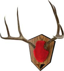 deer antler mounting plaques kit mount ideas decorating for small bathrooms shed mou