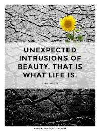 Unexpected Beauty Quotes