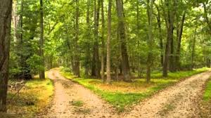 "essay road not taken robert frost research paper academic service   essay road not taken robert frost in the poem ""the road not taken """