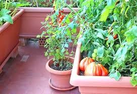 kitchen garden kerala fall planning a vegetable garden ideas the