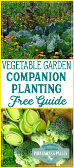Vegetable Companion Planting Charts Garden Types Vegetable Garden Companion Planting Chart For
