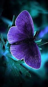 Phone Wallpapers with Blue Butterfly ...