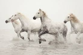 wild white horses running free. Wonderful Horses Wild Horses Running Free My Bucket List Starts Here One Can Travel To  France And Photograph These Stunningly Beautiful Wild White Horses Throughout White Horses Running Free Pinterest