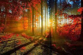 Download 2560x1700 Autumn, Sunrays ...
