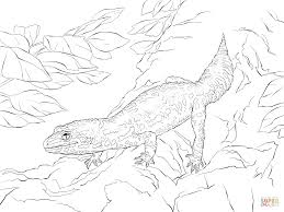 Small Picture Realistic Leopard Gecko coloring page Free Printable Coloring Pages