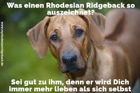 Rhodesian Ridgeback Zitate Und Sprüche