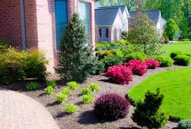 Outdoor, Terrific Green Round Modern Soil Front Yard Plants Ornamental  Mixed Plants Ideas: interesting