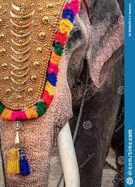 Decorated Elephant At Temple Festival ...