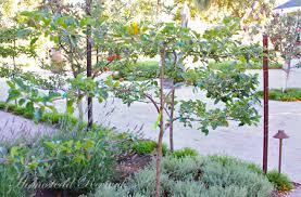 UnderPlanting U2013 Exposed  Bypass Nurseries Garden CentreUnderplanting Fruit Trees