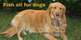 Fish Oil Dosage Chart Dog Dosing Of Fish Oil For Dogs Archives Chew On Thischew On This