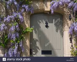 wisteria surrounding a smart cotswold cote front door with typical oolitic honey coloured cotswolds quarried