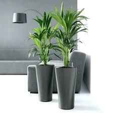 indoor large plant pots indoor plant pots planters large indoor plant pots planters black stylish self