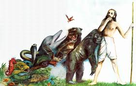 words essay on creation and evolution