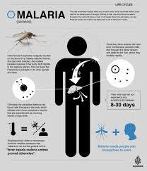 malaria infographic aljazeera jpg atilde malaria malaria infographic aljazeera jpg