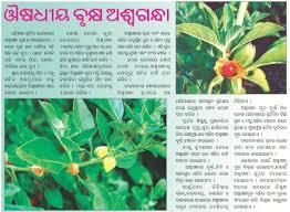 medicinal plants medicinal plant ashwagandha samaja