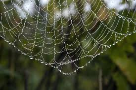 full size of syn x delicate dew covered spider web millions of giant house spiders are