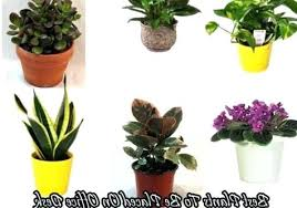 office cubicle plants. Cubicle Plant Plants Archives Office With Regard To Popular Household Desk Plan .
