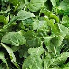 arugula herb seed