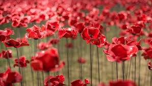 Image result for poppy wave images