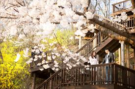Top 10 Cherry Blossom Spots In Korea For Wedding Photography