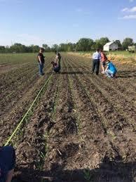 Evaluating Corn Stands Integrated Crop Management