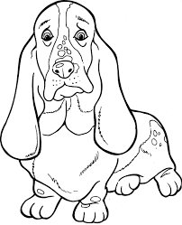 Basset Hound Coloring Page From Dogs