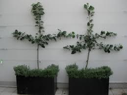 9 Best Flemingu0027s Fruit Trees Images On Pinterest  Fruit Trees Pots For Fruit Trees