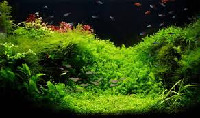 best substrate types for planted tanks