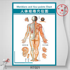 Acupuncture Chart Poster Buy Acupuncture Acupoints Graphic Health Human Meridian