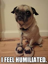 I feel humiliated. - Poor Pug. - quickmeme via Relatably.com