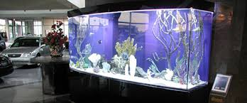 The 10 Best Aquariums For Your Office  Blue Planet Aquarium Services a