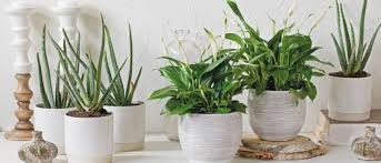 Planten Woonkamer Heerlijk 236 Best Woonkamer Images On Pinterest