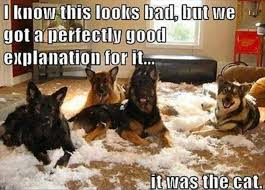 Funny Dog Quotes Adorable Dogs Make A Mess Funny Quotes Dump A Day