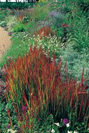 Best 25+ Grasses for shade ideas on Pinterest | Shade grass, Ornamental  grasses for shade and Grow grass in shade