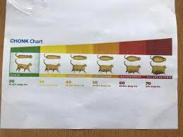 Chonk Chart Poster Chonk Chart Doggohate