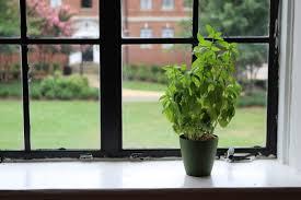 5 plants for an indoor vegetable garden